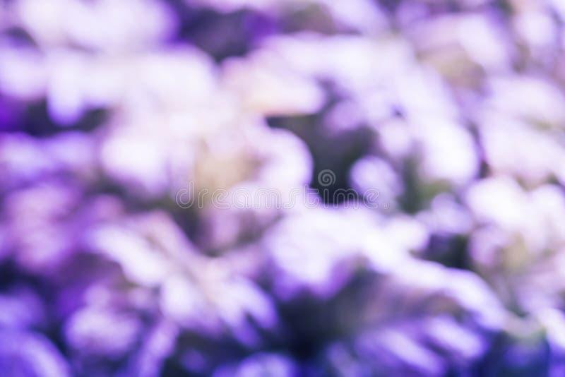 Fondo natural borroso extracto, tono púrpura fotos de archivo libres de regalías