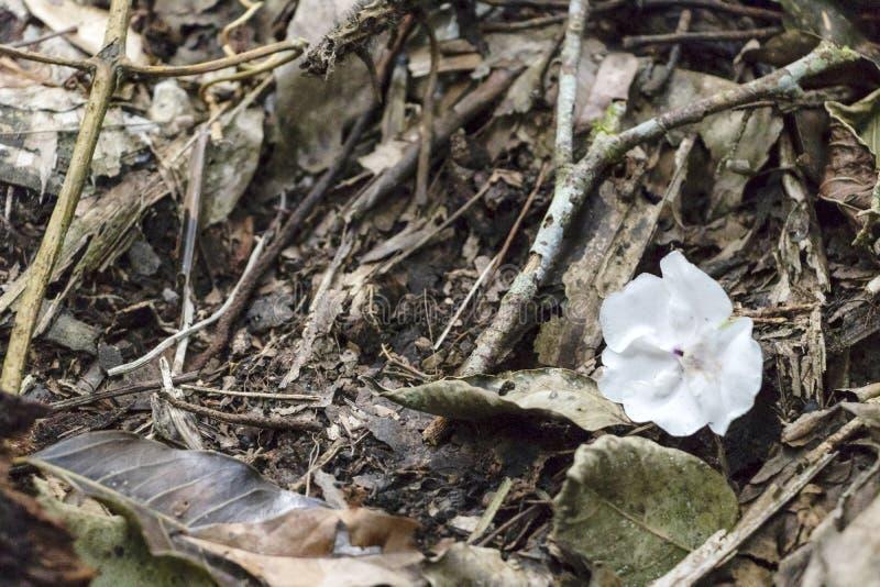 Fondo natural con cierre de la flor blanca para arriba en la tierra de la selva tropical imágenes de archivo libres de regalías