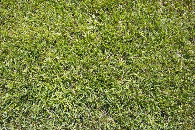 Fondo natural con la hierba verde acortada fresca foto de archivo
