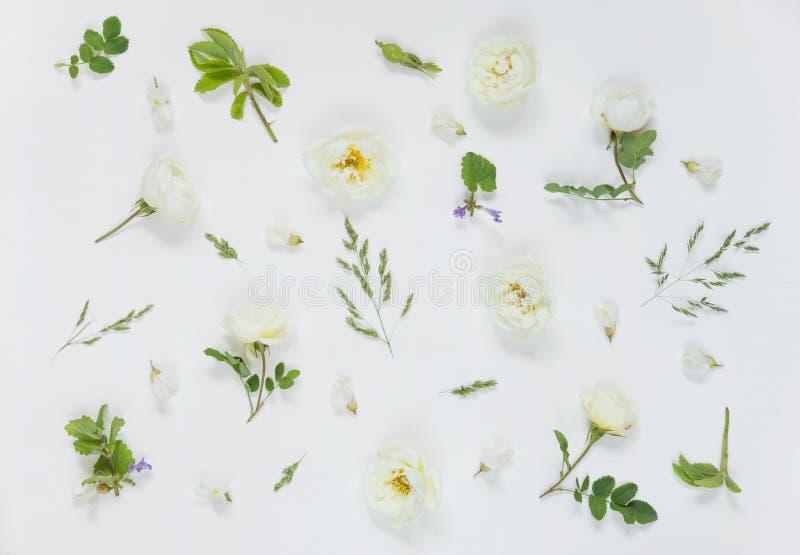 Fondo natural con las flores color de rosa salvajes blancas imágenes de archivo libres de regalías