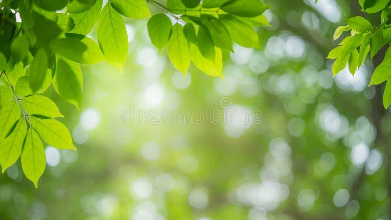 Fondo natural de hoja verde para la portada fotos de archivo libres de regalías