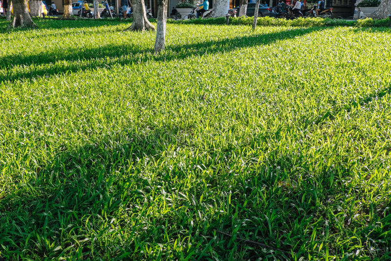 Fondo natural de la hierba verde imagen de archivo