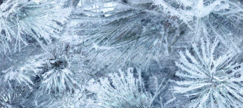 Fondo natural de la Navidad del invierno Ramas de árbol Spruce cubiertas con la helada y la nieve, espacio de la copia, fotos de archivo libres de regalías