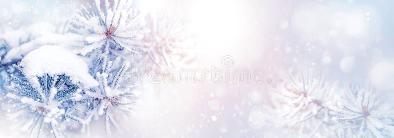 Fondo natural de la Navidad del invierno Ramas del pino en la nieve en un formato nevoso hermoso de la bandera del bosque Copie e fotografía de archivo libre de regalías