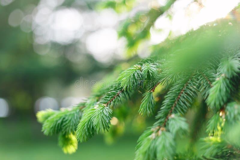 Fondo natural de la primavera hermosa E Foco suave E foto de archivo libre de regalías