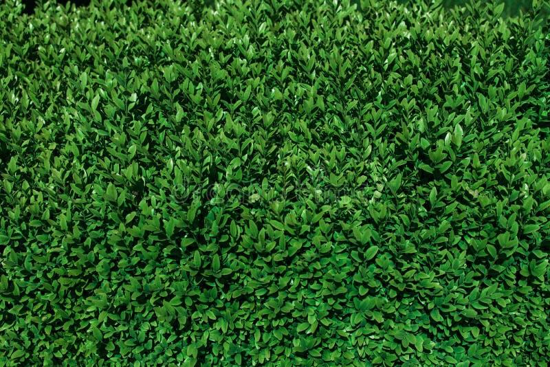 Fondo natural del eco de hojas verdes imagen de archivo libre de regalías