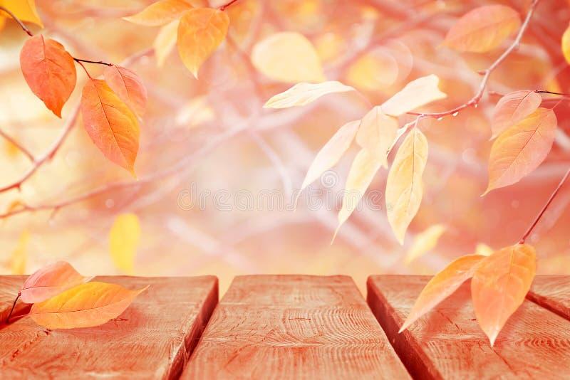 Fondo natural del otoño delicado apacible Rosa y hojas amarillas en el bosque del otoño fotografía de archivo