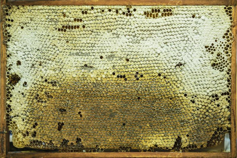 Fondo natural del panal con la miel de oro, estructuras en primer del marco de madera, textura de la cera imagen de archivo libre de regalías