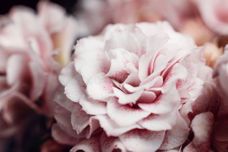 Fondo natural Detalles de la fotografía macra de la flor del kalanchoe Vista macra de la textura abstracta de la naturaleza y del fotografía de archivo libre de regalías
