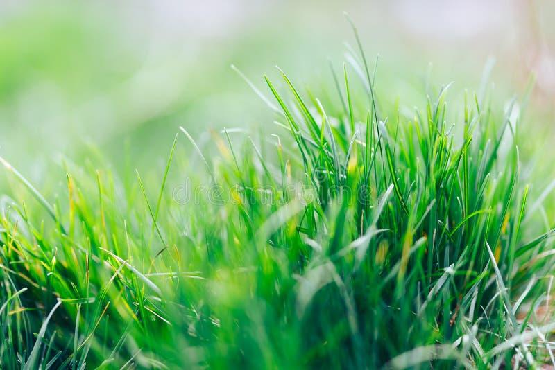 Fondo natural fresco del extracto de la hierba verde y del bokeh borroso belleza Cierre del foco selectivo para arriba para abstr imagenes de archivo