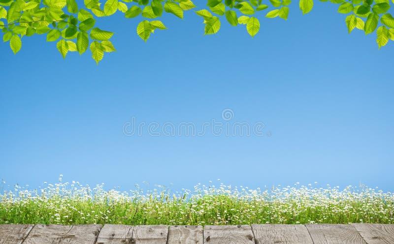 Fondo natural primaveral con flores imagen de archivo libre de regalías