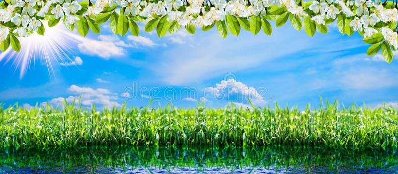 Fondo natural verde Hierba verde de la primavera, agua, sol y cielo imagenes de archivo