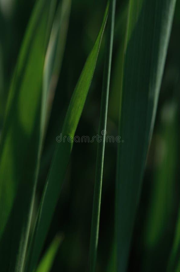 Fondo natural, verde oscuro fotografía de archivo libre de regalías