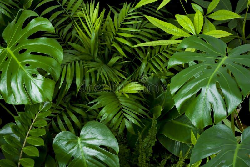 Fondo natural verde oscuro de hojas de plantas tropicales limpias imagenes de archivo