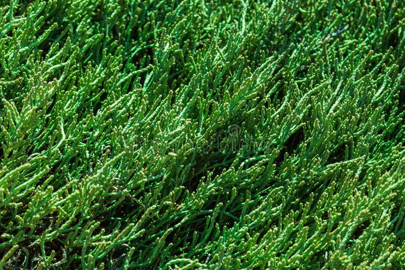 Fondo natural verde oscuro imagenes de archivo