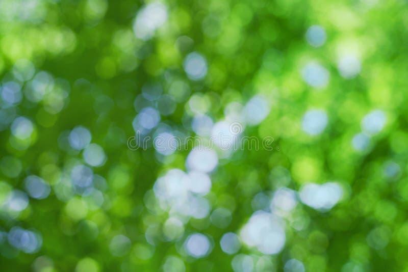 Fondo naturale astratto del bokeh, foglie della sfuocatura fotografia stock libera da diritti