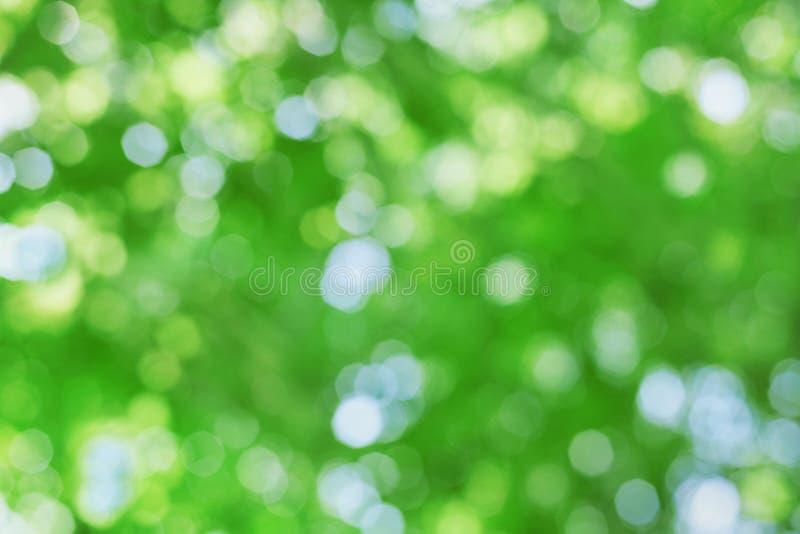 Fondo naturale astratto della sfuocatura, foglie defocused fotografie stock libere da diritti