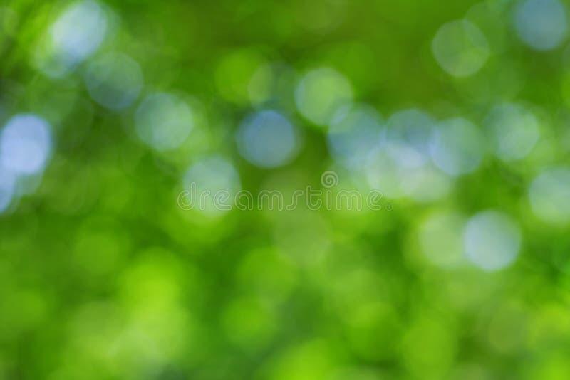 Fondo naturale astratto della sfuocatura, foglie defocused immagini stock libere da diritti