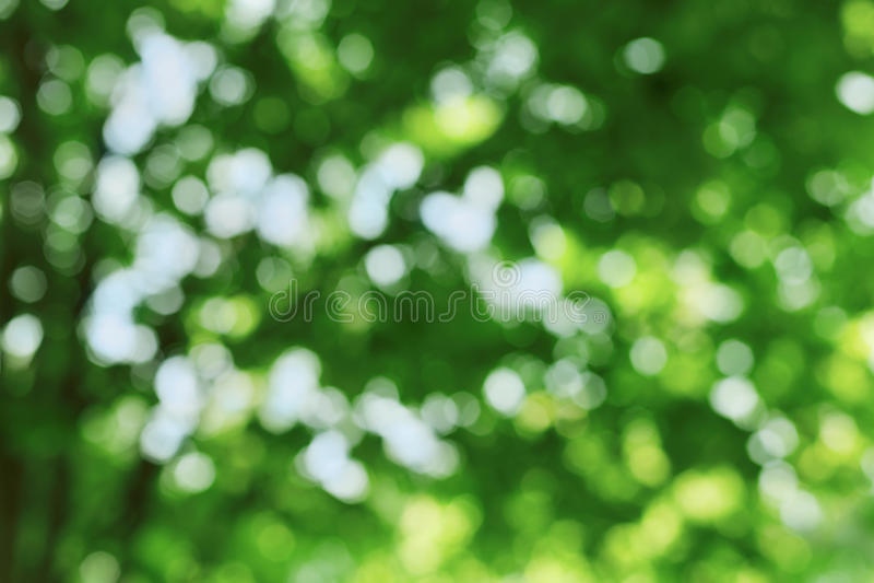 Fondo naturale astratto della sfuocatura, foglie defocused, bokeh verde fotografia stock