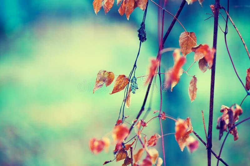 Fondo naturale d'annata di autunno fotografia stock