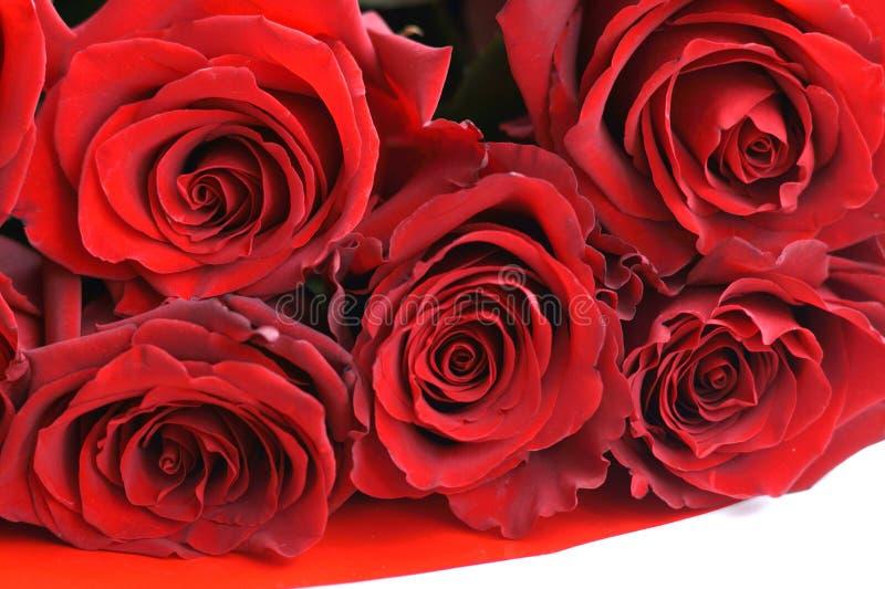 Fondo naturale delle rose rosse fotografia stock