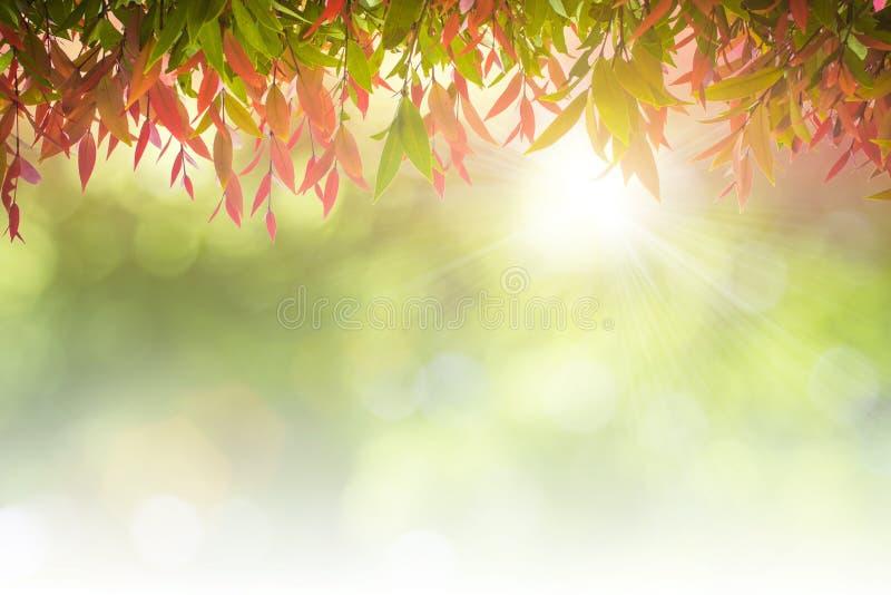 Fondo naturale di bianco delle foglie verdi fotografia stock
