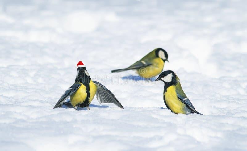 Fondo naturale di inverno con i bei capezzoli divertenti degli uccelli in Th fotografia stock