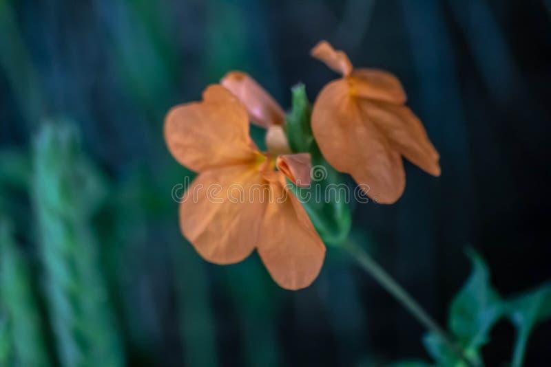 Fondo naturalista hermoso con la parte de la flor anaranjada con las hojas el contraste de los dos colores hace la imagen fabulos imagenes de archivo