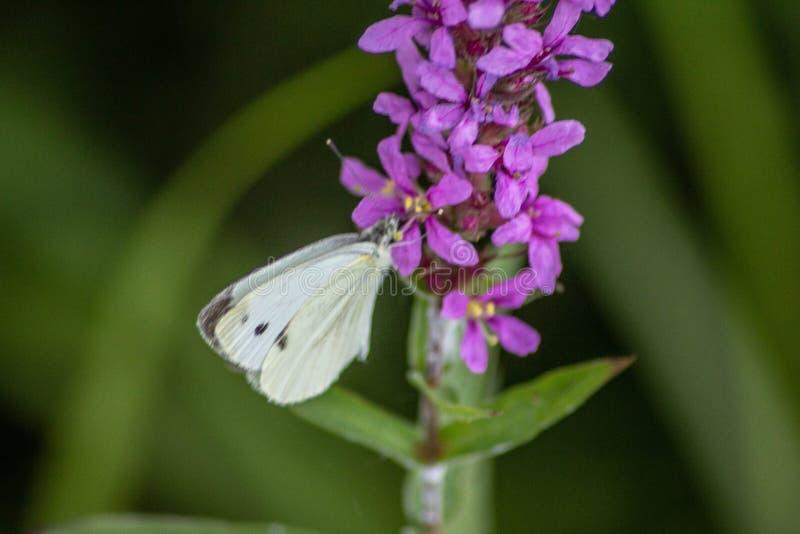 Fondo naturalista imágenes borrosas de la flor y del insecto una combinación muy importante para la vida en contrastes del tterra fotos de archivo