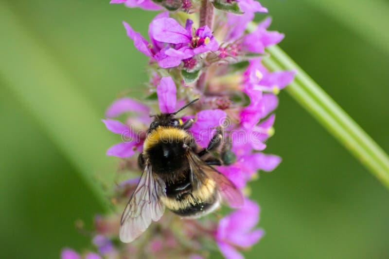 Fondo naturalista imágenes borrosas de la flor y del insecto una combinación muy importante para la vida en contrastes del tterra fotografía de archivo