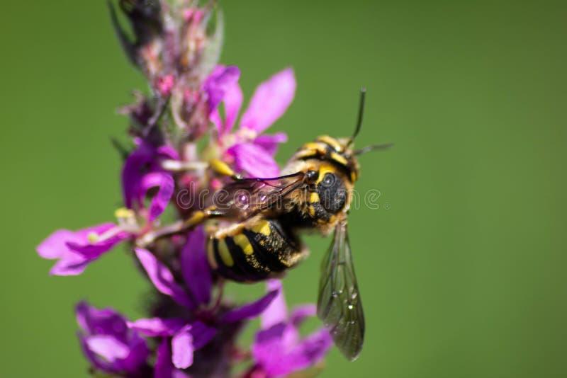 Fondo naturalista imágenes borrosas de la flor y del insecto una combinación muy importante para la vida en contrastes del tterra imágenes de archivo libres de regalías