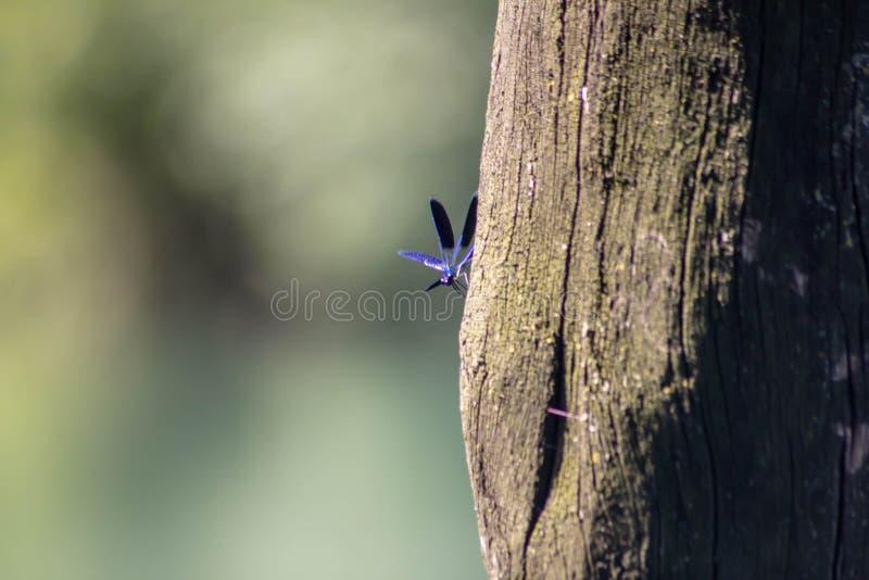 Fondo naturalista imágenes borrosas de la flor y del insecto una combinación muy importante para la vida en contrastes del tterra fotografía de archivo libre de regalías