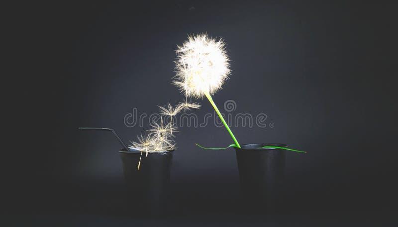 Fondo negro creativo con las tazas y la inflorescencia disponibles de papel del diente de león imagen de archivo libre de regalías