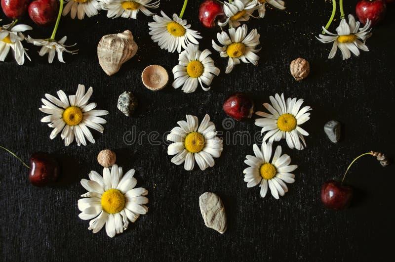 Fondo nero del compensato con le teste bianche della camomilla con le ciliege rosse, i ciottoli, le coperture ed i piccoli dadi immagini stock libere da diritti