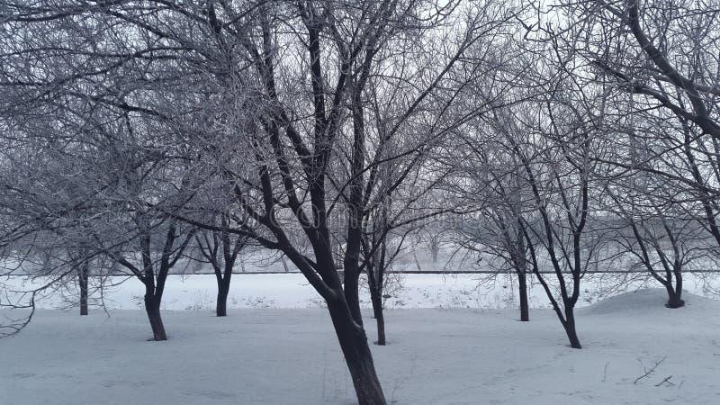 fondo nevoso de la belleza para su diseño Nieve en árboles fotos de archivo libres de regalías