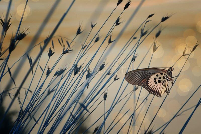 Fondo nostálgico con la mariposa imagenes de archivo