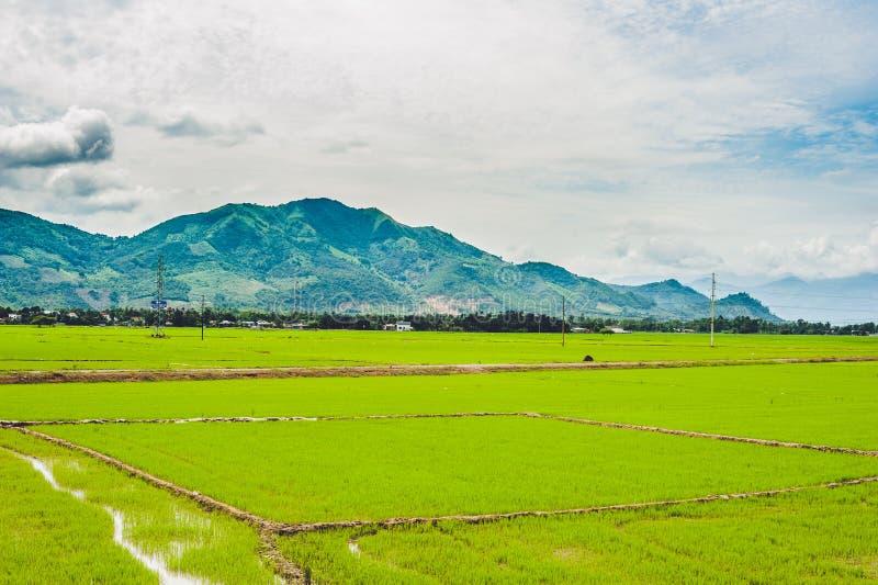 Fondo nublado del paisaje de la nube del cielo azul de la hierba verde del campo del arroz fotos de archivo libres de regalías