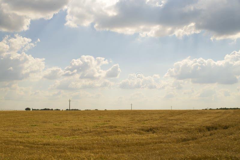 Fondo nuvoloso del cielo blu del giacimento di grano fotografia stock libera da diritti