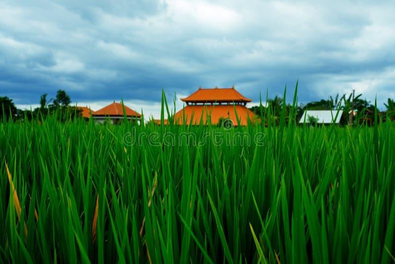 Fondo nuvoloso di paesaggio della nuvola del cielo blu dell'erba verde del giacimento del riso immagini stock libere da diritti