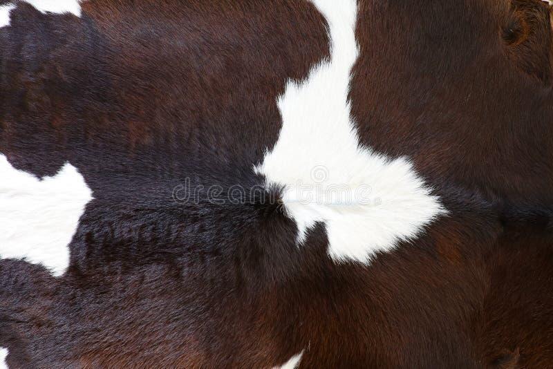 Fondo o struttura della pelle della pelliccia della mucca fotografie stock libere da diritti