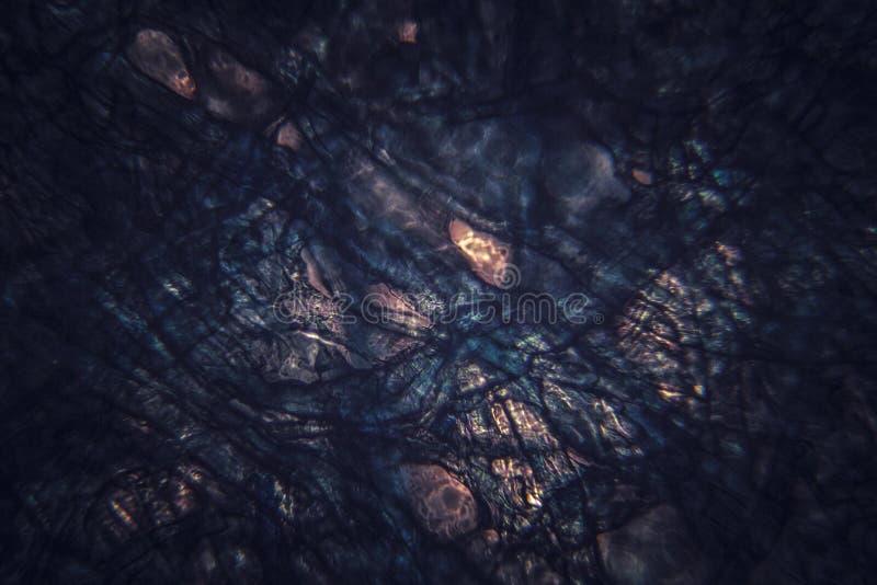 Fondo orgánico microscópico oscuro foto de archivo libre de regalías
