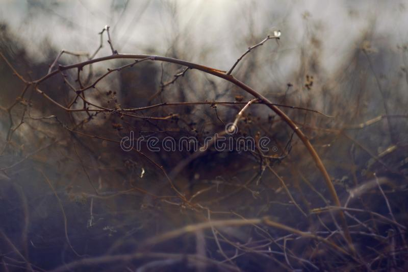 Fondo oscuro borroso extracto con las ramitas de arbustos foto de archivo