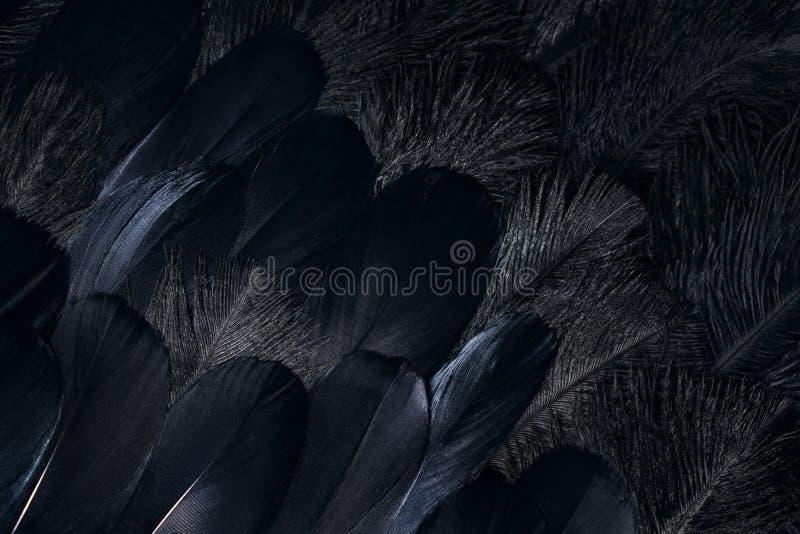 Fondo oscuro de las plumas del cuervo fotografía de archivo