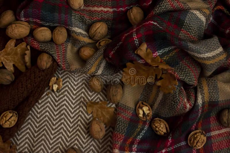 Fondo otoñal hermoso con las nueces y las hojas fotografía de archivo