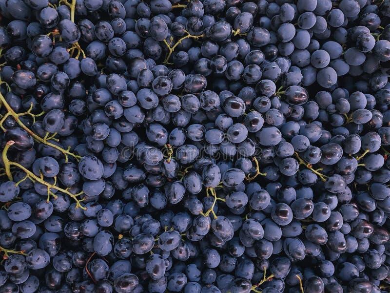 fondo púrpura dulce orgánico crudo de las uvas foto de archivo libre de regalías
