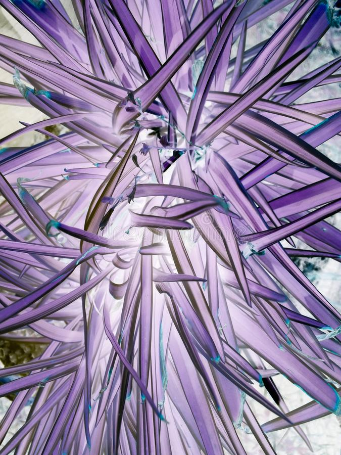Fondo púrpura o violeta del modelo de la textura, de la violeta concepto ultra imagen de archivo