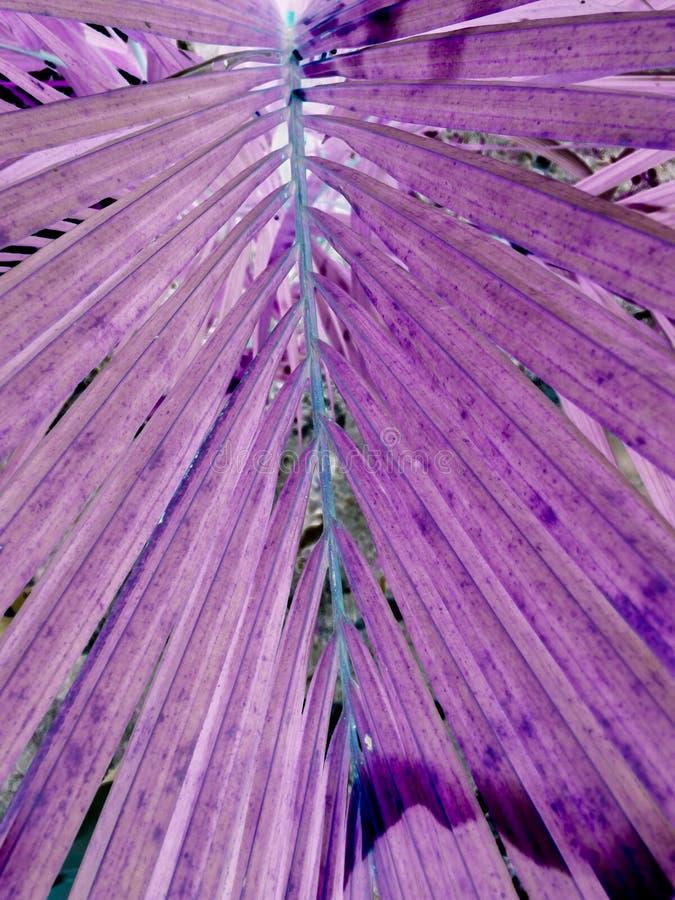 Fondo púrpura o violeta del modelo de la textura, de la violeta concepto ultra imagenes de archivo