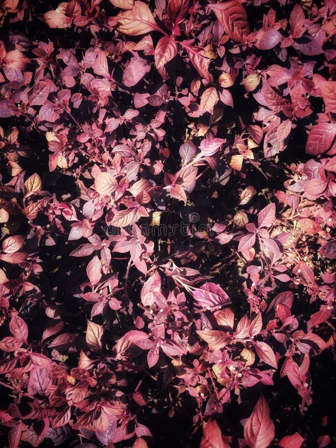 Fondo púrpura o violeta del modelo de la textura, de la violeta concepto ultra imagen de archivo libre de regalías