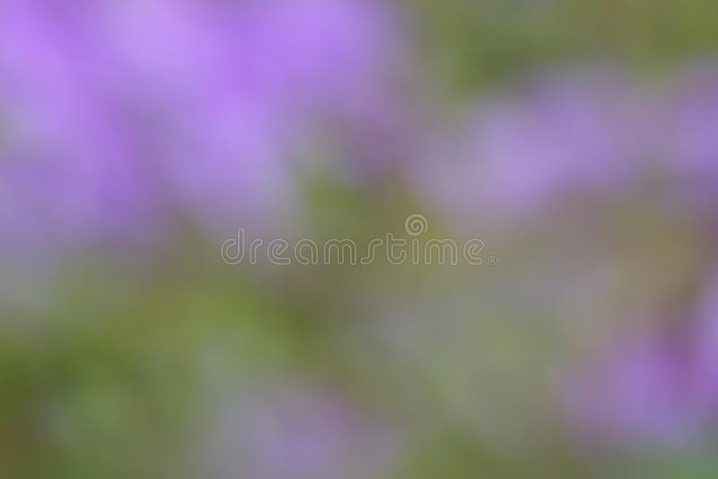 Fondo púrpura verde del verano - fotos comunes de la falta de definición imágenes de archivo libres de regalías