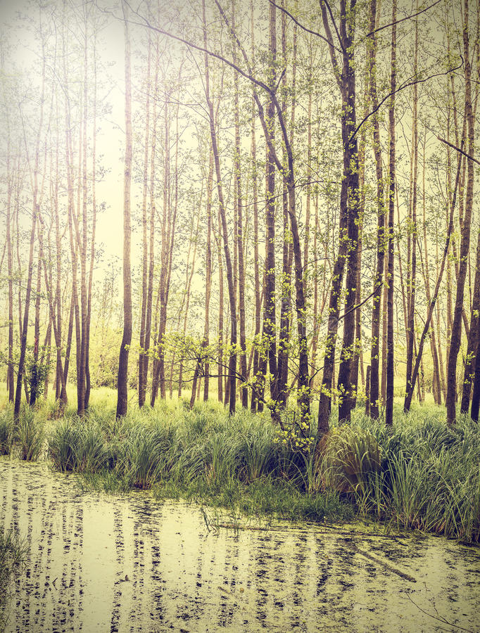 Fondo pacifico dell'annata della natura fotografia stock